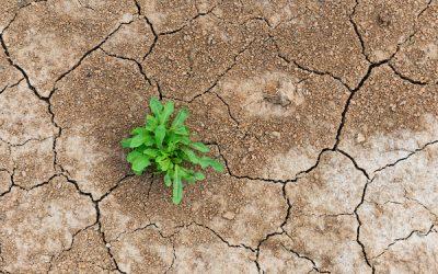 Three Ways to Increase Organizational Resiliency
